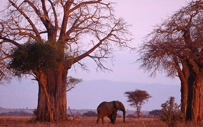 africa safari tours