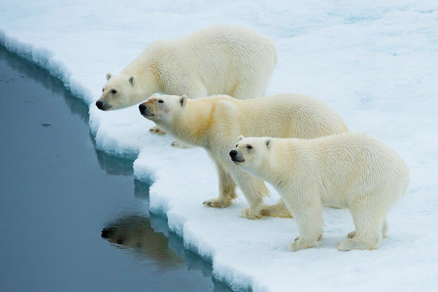 Spitsbergen Tours