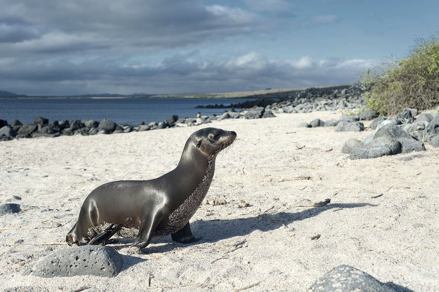 Budget Tours to the Galapagos Islands