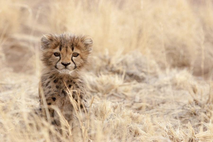 Tanzania Safari & Tours