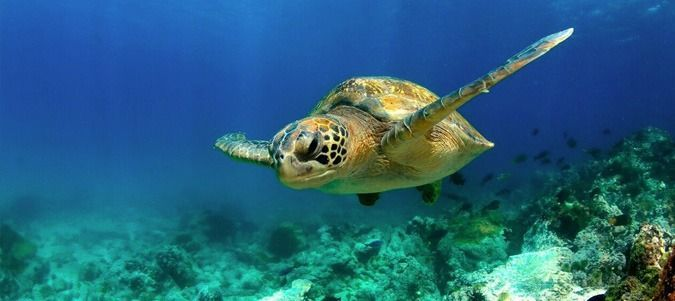 Diving Trips in the Galapagos Islands