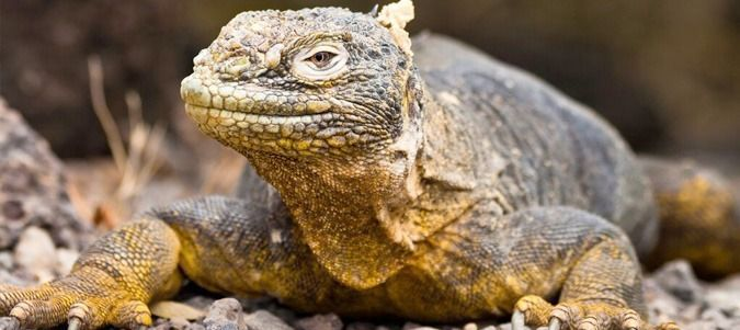 Standard Tours to the Galapagos Islands